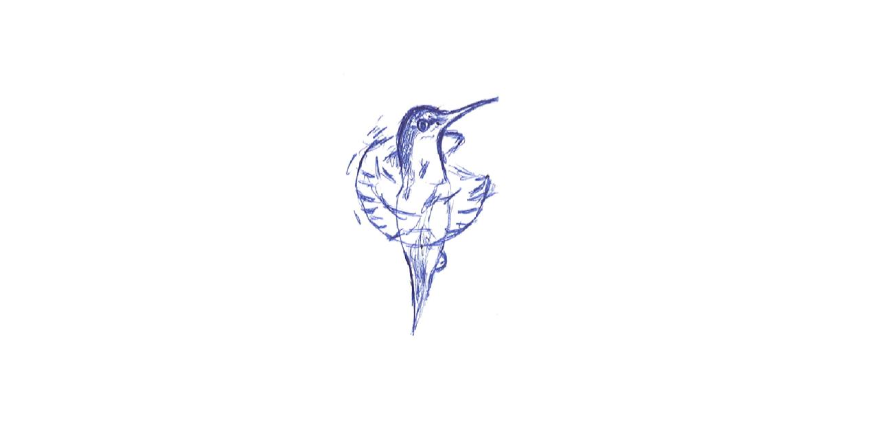 colibrì-alessia-sini-sito