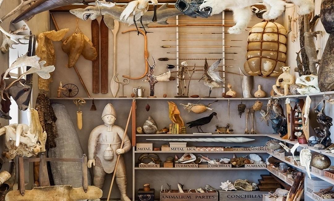 """Nuove Alleanze: """"Collezionismo, mercato e allestimento: i """"naturalia"""" di casa Gonzaga tra modernità e contemporaneità – articolo di Raffaella Morselli"""